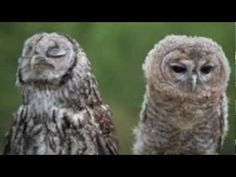 The Owl Song by The Whizpops! - YouTube- To share with students on week 10 fall- Research