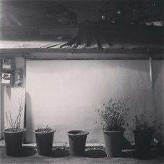 .@nohheungsu | #Korea #seoul#blackandwhite#flowerpot#night#light#한국#서울#흑백#밤 | Webstagram