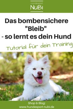 """➤ Dem Hund """"Bleib"""" beibringen – so geht es ganz einfach! Teach the dog """"stay"""" – but how? Here we show you how our dogs learn to reliably hold commands. All Dogs, Dogs And Puppies, Dog Pitbull, Animals And Pets, Funny Animals, Dog School, Companion Dog, Smiling Dogs, Service Dogs"""