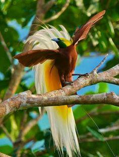 """Coisas de Arlete: """"Hoje eu quero ouvir o canto dos pássaros no beira..."""