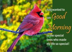 Share a special #FridayFeeling for a special person with a warm #goodmorning wish using this #ecard.