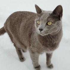 Our little snow cat  . . . . . #snow #snowcat #grandjunctionphotographer #westslopebestslope #catsofinstagram #ig_pet #igcats #igcatsdaily #igcatclub #furrendsupclose #outdoorcat #adventurecat