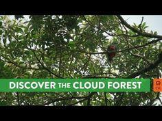Costa Rica: Monteverde Cloud Forest (HD Audio)