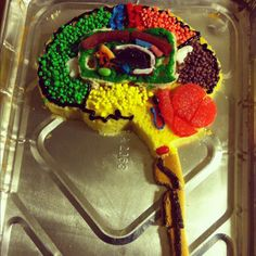 Brain Project Create a model of the Brain. It can be an Edible Brain but if you decide to a cake (see me for a handout about structures you need to label). You will need to label the various par…