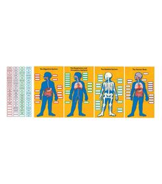 "Help students learn about the parts of the body and the systems of the body with this interactive bulletin board set. Use the 80 color-coded, detachable labels to identify the major organs, the digestive system, the skeletal system, and the respiratory and circulatory system. This 84-piece set also includes four body system charts (13.75"" x 24"") and a teacher resource guide. #CDWish13"