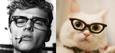 Cats and Handsome Men with Similar Poses! #cats #cat #men
