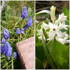 Frühlingsimpressionen bei *Hummelsüß* http://hummelsuess.blogspot.de/