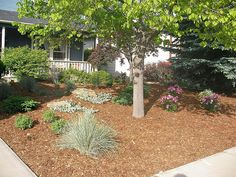 Mulch and plants covering whole yard