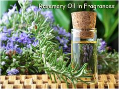 Rosmarinus officinalis, commonly known as rosemary, is a woody, perennial herb with fragrant, evergreen, needle-like leaves and white, pink, purple, or blue flowers, native to the Mediterranean region. Rosemary oil is one of the most popular essential oils for its wide array of benefits.  It is a cool, crisp herbal plant having camphoraceous eucalyptus notes. Read more on https://www.facebook.com/cplaromas/photos/a.204401446257641.60067.204150379616081/948092691888509/?type=1&theater