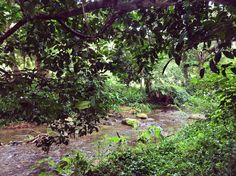Naturaleza, Nature, Rio, River, Árboles, Trees, Barbosa, Antioquia, Colombia