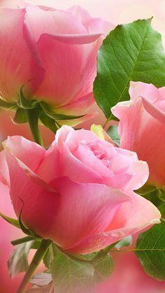 Que seu domingo seja perfeito, com o perfume da Beleza, Amor e Alegria!!