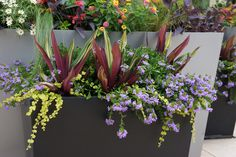 Key Insights on Planting Design in our Interview with Top Plantsman Adam Woodruff · Landscape Architects Network Container Flowers, Container Plants, Container Gardening, Container Design, Display Design, Plant Design, Season Colors, Growing Plants, Planting