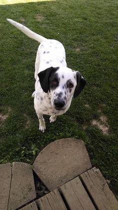 FOX45 Dayton's Dog of the Day - Cooper