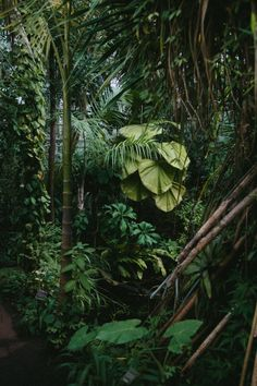 Hortus Botanicus Amsterdam, the tropical greenhouse. Hortus Botanicus Amsterdam, the tropical greenh Tropical Greenhouses, Plant Aesthetic, Tropical Plants, Tropical Forest, Tropical Paradise, Tropical Gardens, Tropical Flowers, Mother Nature, Lush