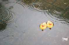 Rubber duckies in a rain puddle