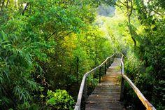 Entdecken Cat Tien Nationalpark - #AsiaticaReisen