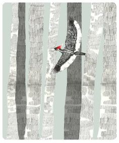 The Lord God Bird. Ivory-Billed woodpecker that was believed to be extinct but then found in Arkansas. Sufjan Stevens wrote a song about the bird.