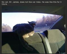 I lol'd..reminds me of a car trip...but i had 3 of them doing this...in a blizzard