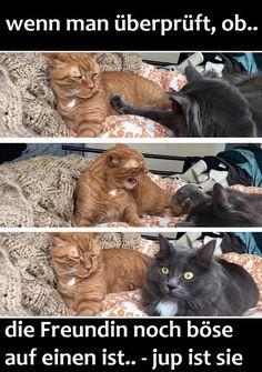 wenn die Freundin noch böse ist.. :D