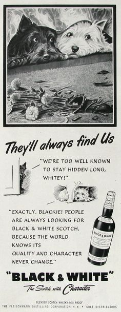 1951 Black & White Scotch Ad  Morgan Dennis Art  by RetroReveries