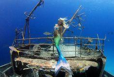 Mermaid on a shipwreck