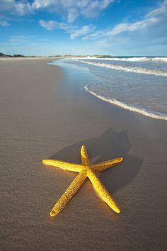 Photograph-Yellow starfish on the beach-Photograph printed in the USA Beach Walk, Ocean Beach, Beach Fun, Summer Beach, Sunny Beach, Long Beach, Summer Vibes, Wale, I Love The Beach