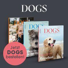 7-Wochen-Profitraining: So kriegen Sie die Aufmerksamkeit Ihres Hundes | STERN.de