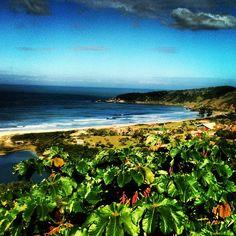 Praia do Rosa - SC - Brasil