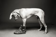 Shoe Dogs by McCartneys Dog Photography