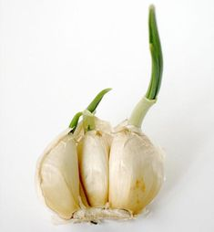 Garlic | The Thrifty Kitchen Garden: Buy These 10 Vegetables Once and You'll Never Have to Buy Them Again