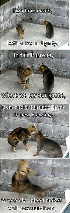 cats and romeo and juliet….amazing cats and romeo and juliet…. William Shakespeare, Shakespeare Meme, Crazy Cat Lady, Crazy Cats, Teacher Memes, Teacher Stuff, Cat Memes, Cat Puns, Romeo And Juliet