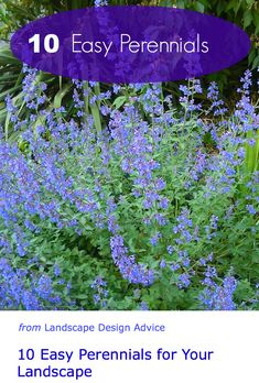 Fabulous, colorful, low maintenance perennials for your garden. http://www.landscape-design-advice.com/easy-to-grow-flowers.html