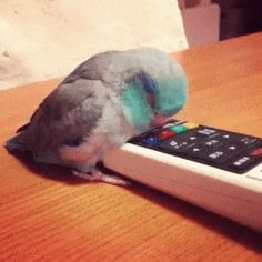 Remote Is Good for Sleeping