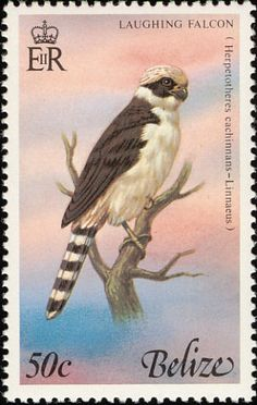 Laughing Falcon stamps - mainly images - gallery format