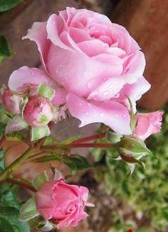 beautiful flower!!