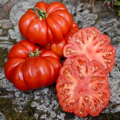 """Costoluto Fiorentino Tomato- For sauce (80 days) """" Yes, it tastes like Italy, It tastes like whatever makes great sauce great.  Sweet too with a rich flavor"""""""