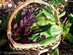Mangold  #food #gardening #harvest