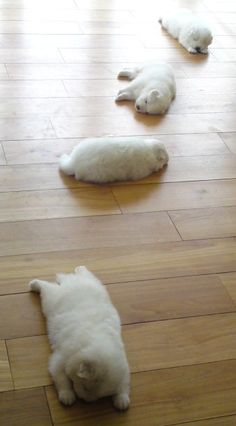 trail of puppies!