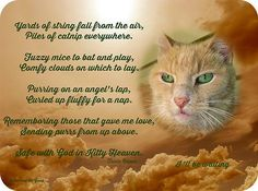 Safe with God in Kitty Heaven....