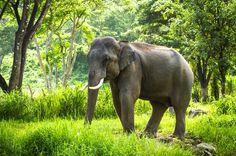Chang Mai Elephant