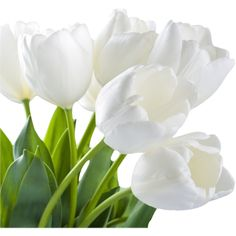 tulips (12).png ❤ liked on Polyvore featuring flowers