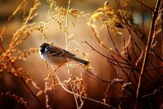 oiseau-automne