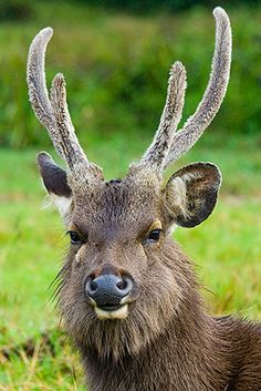 #51 Horton Plains National Park in Sri-lanka. A protected area in the central highlands of the country and is home to large herds of Sri Lankan Sambar Deer. Also popular for bird watching, the World's End and Baker's Falls.