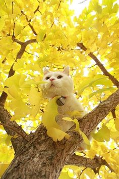 CyBeRGaTa - Cats, Memes, New Mexico — Shironeko enjoying an autumn day on the farm.