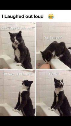 lol lucy's randomness gatos, humor de animal, a Funny Animal Jokes, Funny Animal Pictures, Cute Funny Animals, Stupid Funny Memes, Cute Baby Animals, Funny Cute, Funny Dogs, Cute Cats, Funny Stuff