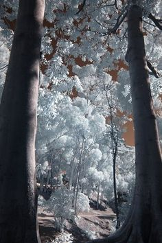 Enchanted Forest, Balboa Park, San Diego, USA.