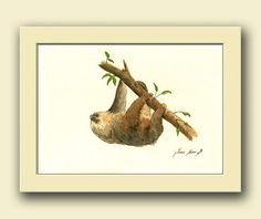 Sloth animal  two toed sloth Forest wildlife animal by JuanBosco