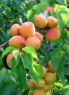 Frutales y Frutos
