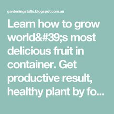 Learn how to grow world's most delicious fruit in container. Get productive result, healthy plant by following simple easy steps. ~ Gardening Stuff