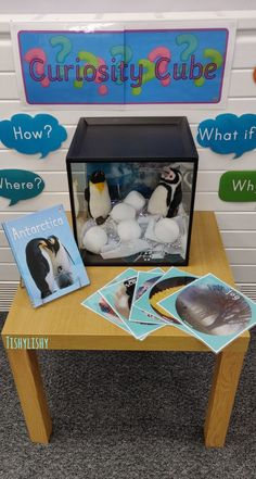 Early Years ideas from Tishylishy Curiosity Cube featuring penguins Eyfs Activities, Preschool Activities, Preschool Classroom, In Kindergarten, Year 1 Classroom Layout, Reading Corner Classroom, Curiosity Approach Eyfs, Curiosity Box, Penguins